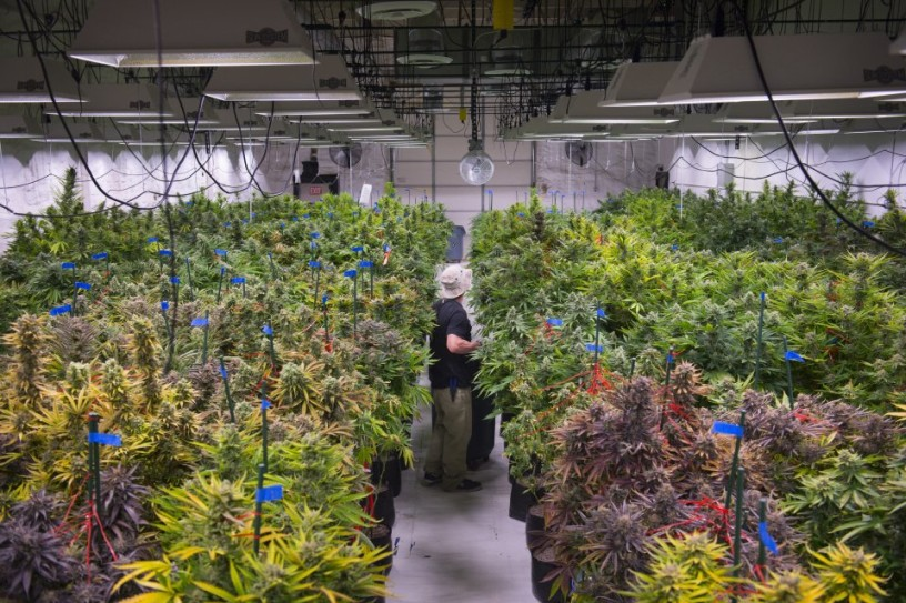 Building Codes Marijuana Processing Facilities